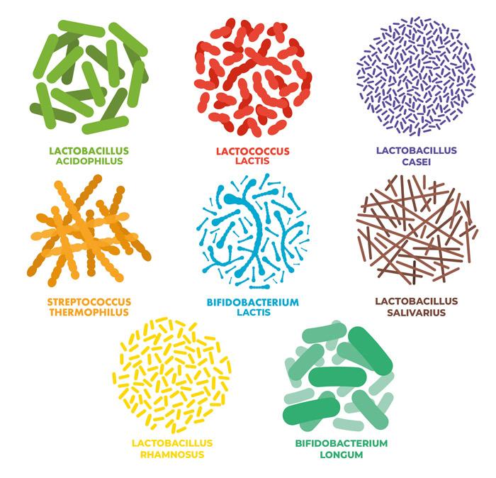 Plantamaxx Bio-Essenz Milchsäurebakterien Kulturen